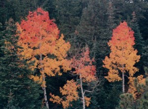 aspen trees in fall Colorado Jeep Tours