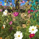 close up of Colorado wild flowers