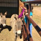 young girls saying hello to donkeys Colorado Jeep Tours