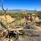 guests on horseback going on trail with mountains in background