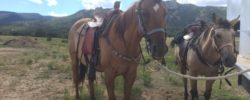 Colorado Jeep Tours Horse 1
