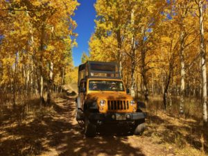 Aspen Lane Jeep driving through Aspen Trees CO Jeep Tour