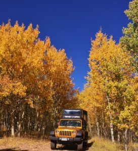 Jeep tour driving through Aspen trees with blue sky