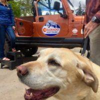 White Lab dog enjoying a Colorado Jeep Tours