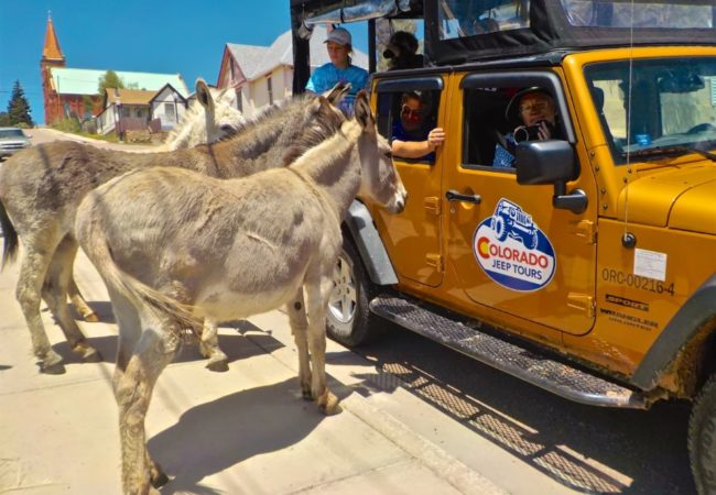 donkey visiting Colorado Jeep Tour guests who are taking photos