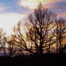 bare trees with sunset in background