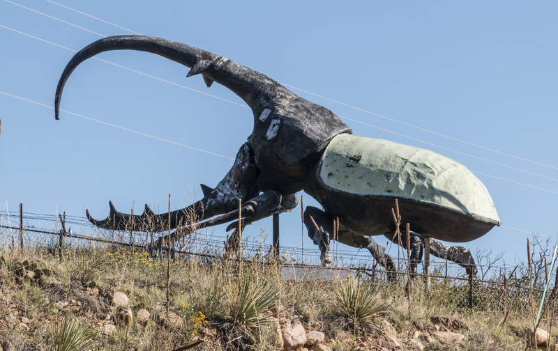 A sculpture of a large West Indian Hercules beetle at May Natural History Museum near Colorado Springs, Colorado.